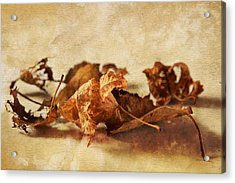 Autumn's Leavings Acrylic Print by Caitlyn  Grasso