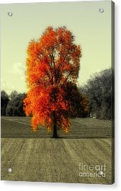 Autumn's Living Tree Acrylic Print