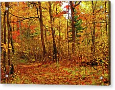 Autumn's Magic Acrylic Print by Bill Morgenstern