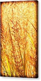 Autumns Passion Acrylic Print by Bob Orsillo