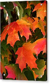 Autumn's Peak Acrylic Print by Paula Tohline Calhoun