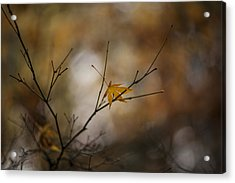 Autumns Solitude Acrylic Print by Mike Reid