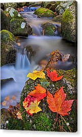Autumn's Song Acrylic Print