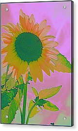 Autumn's Sunflower Pop Art Acrylic Print