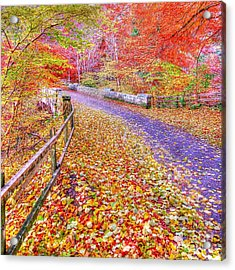 Autumns Way Rouge Acrylic Print by John Kelly