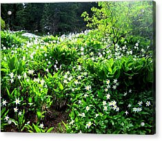 Avalanche Lilies Acrylic Print by Karen Molenaar Terrell