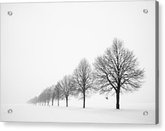 Avenue With Row Of Trees In Winter Acrylic Print