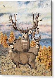 Avery Buck Acrylic Print