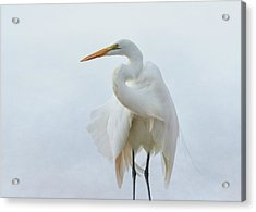 Avian Angel Acrylic Print