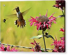Acrylic Print featuring the photograph Aw Buzz Off by Julia Hassett