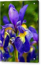 Awaken Acrylic Print by Nelson Bibow