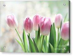 Awakening- Pale Pink Tulips Acrylic Print