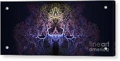 Awakening Acrylic Print by Tim Gainey