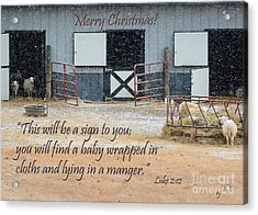 In A Manger Acrylic Print