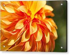 Awesome Blossom Acrylic Print
