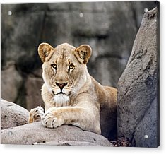 Awesome Cat Acrylic Print by Tammy Smith