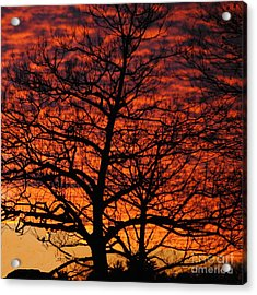 Awesome Winter Sunset - Longwood Gardens - Square Acrylic Print by Jacqueline M Lewis