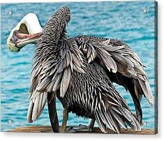 Awkward Pelican Acrylic Print by Jean Noren