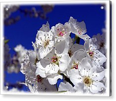 Awsome Blossoms Acrylic Print by Gerry Childs