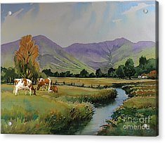 Ayrshire Cattle In Langdale Acrylic Print by Anthony Forster