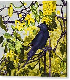 Ayurvedic Krow Acrylic Print