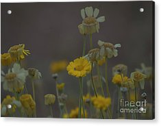 Acrylic Print featuring the photograph Az Flowers by Rod Wiens