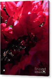 Acrylic Print featuring the photograph Azalea Abstract by Robyn King