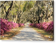 Acrylic Print featuring the photograph azalea lined road in Spring by Bradford Martin