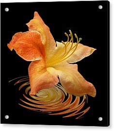 Azalea Ripples Acrylic Print