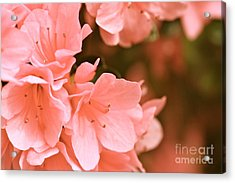 Acrylic Print featuring the photograph Azalea Victorian by Cathy Dee Janes