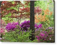 Azaleas And Japanese Maples At Azalea Acrylic Print by Panoramic Images
