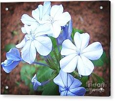 Azure Aura Acrylic Print