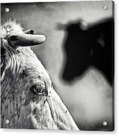 B & W Acrylic Print by Piet Flour