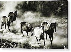 B And W Hosses Acrylic Print by Robert Rhoads