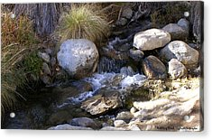 Babbling Brook Acrylic Print by Barbara Snyder