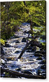 Babbling Brook Acrylic Print by Bill Cannon