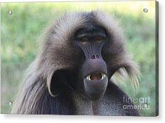 Acrylic Print featuring the photograph Baboon by John Telfer