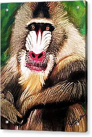 Baboon Stare Acrylic Print by Renee Michelle Wenker