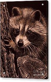 Baby Bandit Acrylic Print