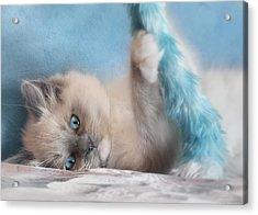 Baby Blues Acrylic Print by Lori Deiter