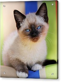 Acrylic Print featuring the photograph Baby Blues by Melanie Lankford Photography