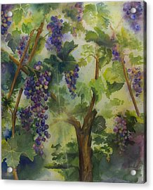Baby Cabernets In Sunlight Acrylic Print by Maria Hunt