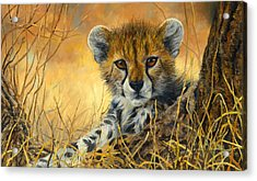Baby Cheetah  Acrylic Print by Lucie Bilodeau