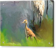 Baby Crane And Mom Acrylic Print
