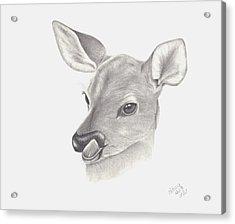 Baby Deer Acrylic Print by Patricia Hiltz