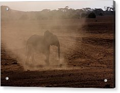 Acrylic Print featuring the photograph Baby Elephant  by Amanda Stadther