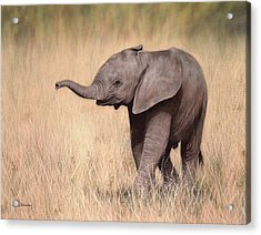 Elephant Calf Painting Acrylic Print by Rachel Stribbling
