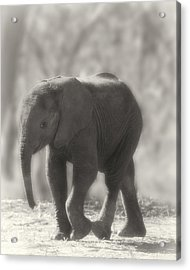 Acrylic Print featuring the photograph Baby Elephant Sepia by Gigi Ebert