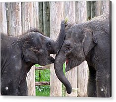 Baby Elephants - Bowie And Belle Acrylic Print