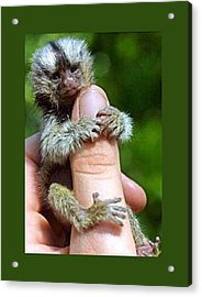 Baby Finger Monkey Green Border Acrylic Print by L Brown